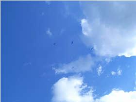 2007N1131.jpg