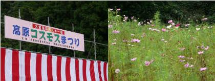 2008年9月28日kosumosu.jpg