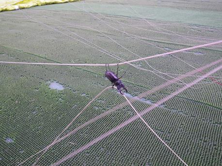 2012.09.29.kabuto.png