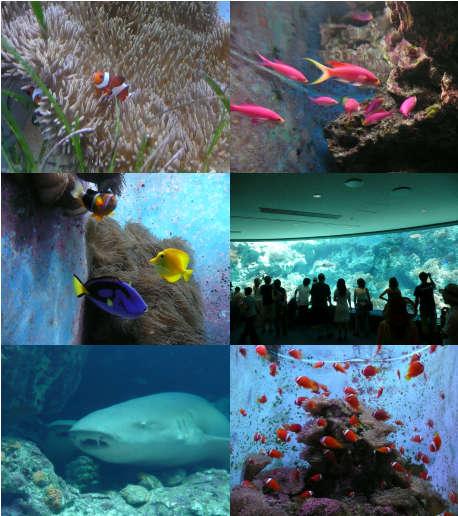 美ら海水族館2008年7月9日.jpg